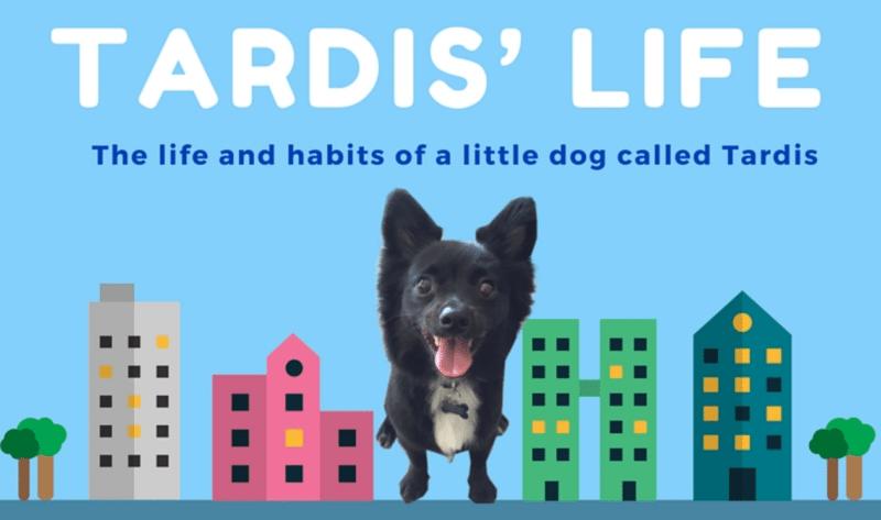 Tardis's Life infographic