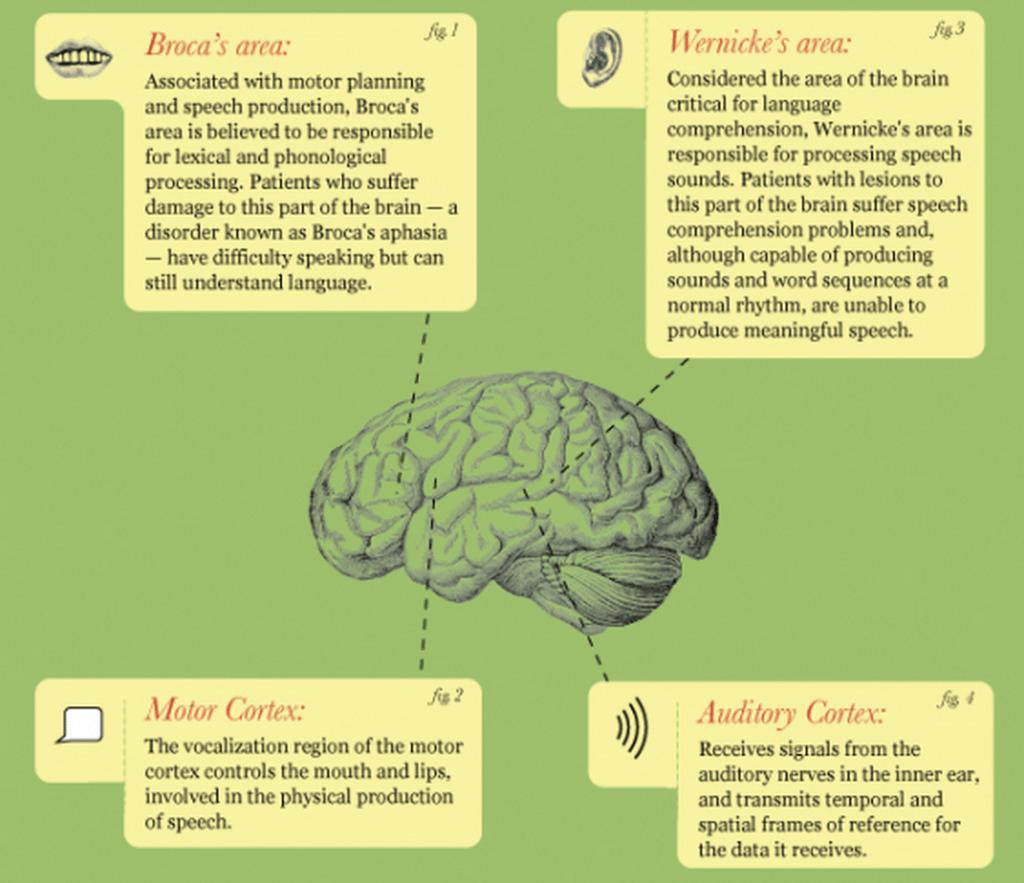 brain-language