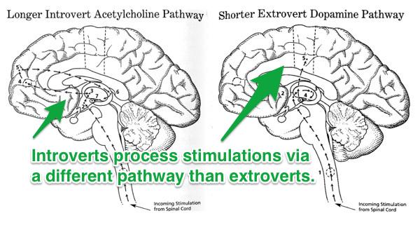 introvert or extrovert - brain scan