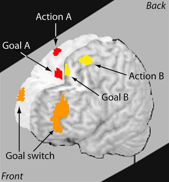 how our brain works, how our brains work multitasking and the brain