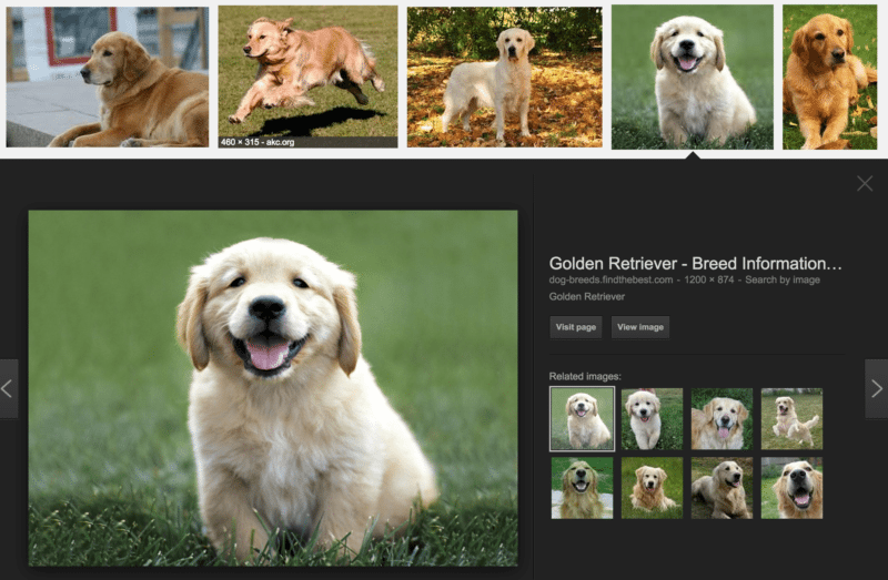 golden-retrievers-google-search