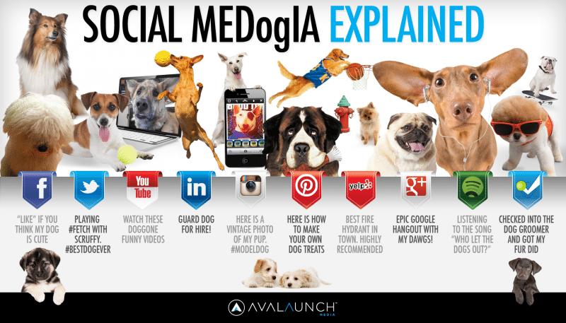 Social media explained by dogs, social media channels, social media marketing