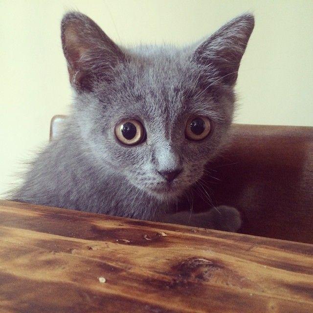otto the kitten